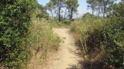 Trail Floresta ok (10)