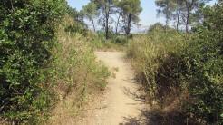 Trail Floresta ok (10)