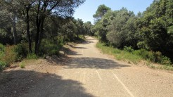 Trail Floresta ok (14)