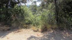 Trail Floresta ok (17)