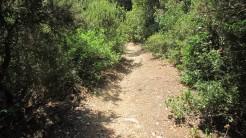 Trail Floresta ok (19)