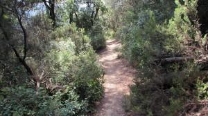 Trail Floresta ok (20)