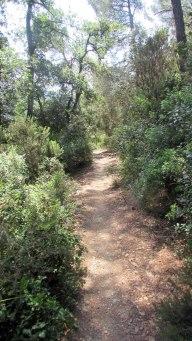 Trail Floresta ok (21)