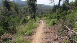 Trail Floresta ok (23)