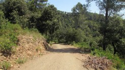 Trail Floresta ok (26)
