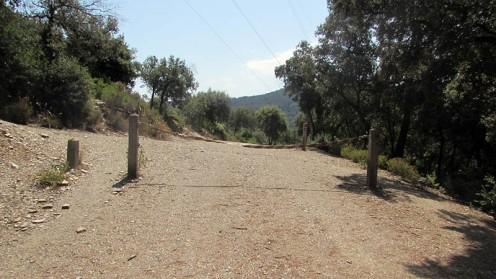 Trail Floresta ok (28)