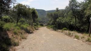 Trail Floresta ok (29)