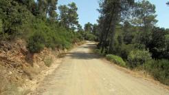 Trail Floresta ok (33)