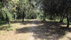 Trail Floresta ok (42)
