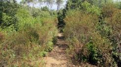 Trail Floresta ok (43)