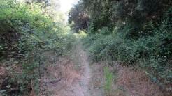 Trail Floresta ok (44)