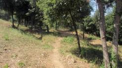 Trail Floresta ok (5)
