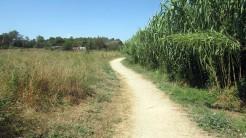 Trail Floresta ok (50)
