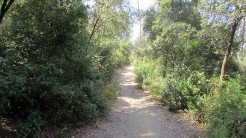 Trail Floresta ok (7)