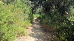 Trail Floresta ok (9)