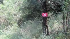 Trail Fonts del Montseny (11)