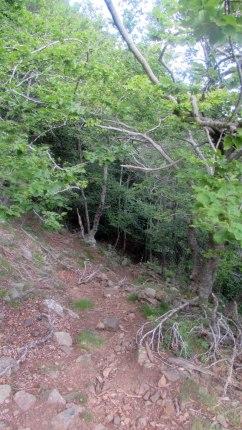 Trail Fonts del Montseny (120)