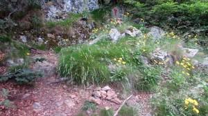 Trail Fonts del Montseny (151)