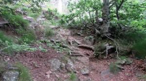 Trail Fonts del Montseny (154)