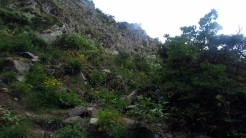 Trail Fonts del Montseny (158)