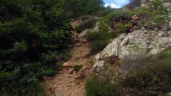 Trail Fonts del Montseny (167)