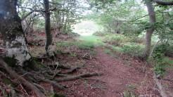 Trail Fonts del Montseny (183)