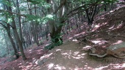 Trail Fonts del Montseny (205)