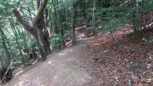 Trail Fonts del Montseny (220)