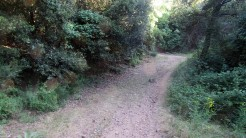Trail Fonts del Montseny (26)