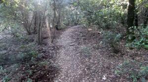 Trail Fonts del Montseny (30)