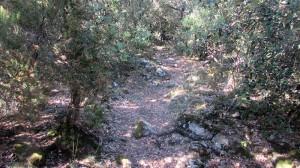 Trail Fonts del Montseny (33)