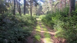 Trail Fonts del Montseny (56)