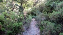 Trail Fonts del Montseny (67)