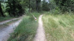 Trail Fonts del Montseny (8)