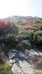 Trail Fonts del Montseny (84)