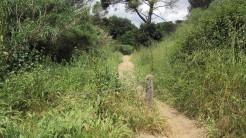 Trail La Floresta (5)