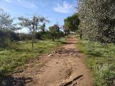 Bada Trail (14)