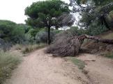 Bada trail (92)