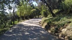 Midnight Trail (21)