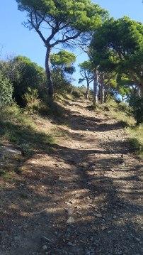 Midnight Trail (45)