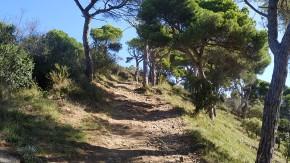 Midnight Trail (46)