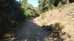 Midnight Trail (55)