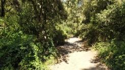 Midnight Trail (57)
