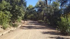 Midnight Trail (60)
