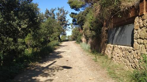 Midnight Trail (9)