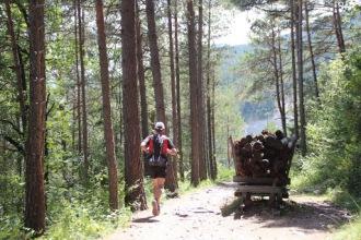 Trail Moixeró 39k Últims metres (271)