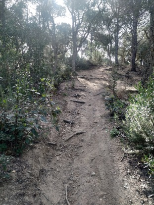 LLORET TRAIL RECORRIDO (124)