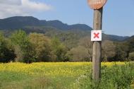 Trail Rocacorba (8)
