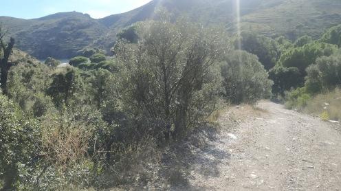 Trail CAP DE CREUS (110)