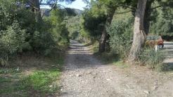 Trail CAP DE CREUS (138)